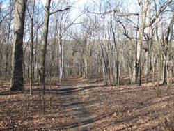 woodlot path