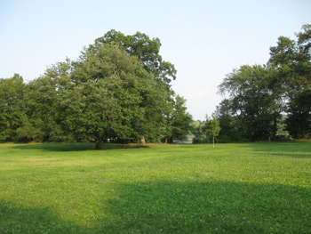 open space at Rindge Field